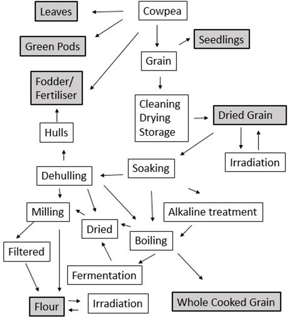 Figure 3.4. Methods of processing for cowpea value-added products