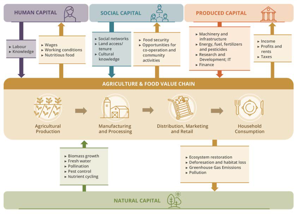 Figure 6.2. Capital stocks and value flows in eco-agri-food systems